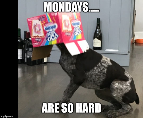 MONDAYS..... ARE SO HARD | image tagged in monday,pop tarts,unicorn,puppy,germanshort hair pointer,gsp | made w/ Imgflip meme maker