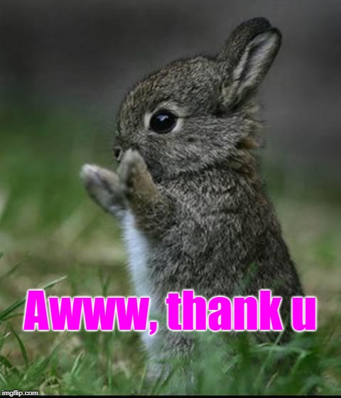 Cute Bunny | Awww, thank u | image tagged in cute bunny | made w/ Imgflip meme maker