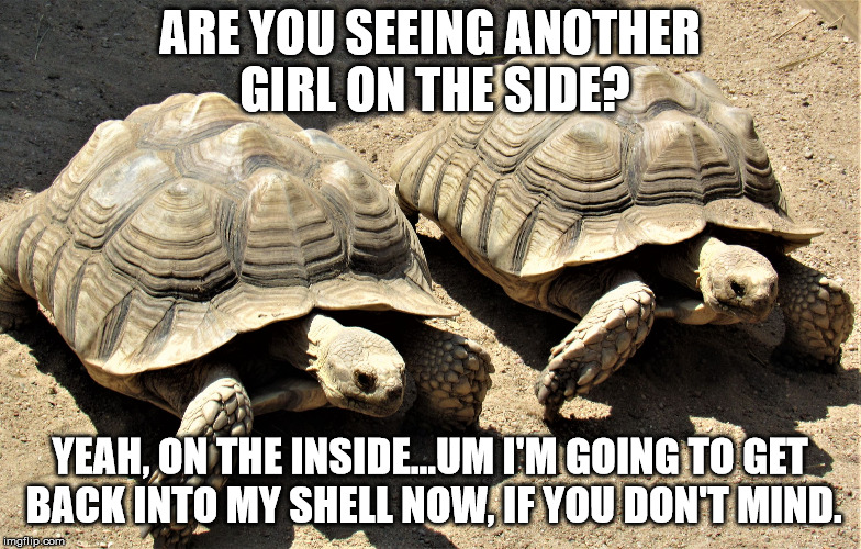 Two tortoises | ARE YOU SEEING ANOTHER GIRL ON THE SIDE? YEAH, ON THE INSIDE...UM I'M GOING TO GET BACK INTO MY SHELL NOW, IF YOU DON'T MIND. | image tagged in two tortoises | made w/ Imgflip meme maker