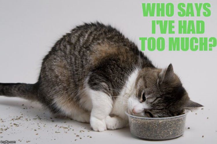 Ah, Stoned Again | WHO SAYS I'VE HAD TOO MUCH? | image tagged in memes,cat,stoned,catnip,head | made w/ Imgflip meme maker