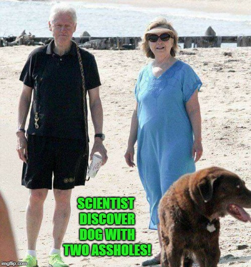 rare find  | SCIENTIST DISCOVER DOG WITH TWO ASSHOLES! | image tagged in clintons,dog | made w/ Imgflip meme maker