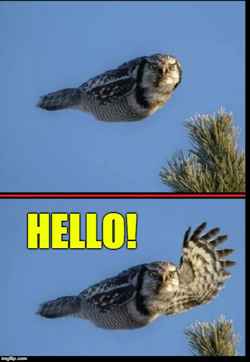 Just Dropped by to say... | HELLO! | image tagged in vince vance,owl waving,owls,greetings,a bird of few words,hi | made w/ Imgflip meme maker
