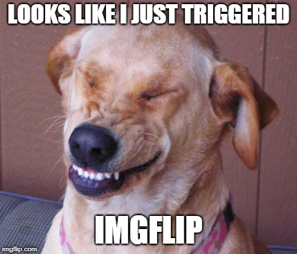 LOOKS LIKE I JUST TRIGGERED IMGFLIP | made w/ Imgflip meme maker