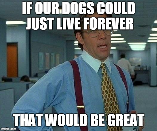 just one wish | IF OUR DOGS COULD JUST LIVE FOREVER THAT WOULD BE GREAT | image tagged in memes,that would be great,offensive,death,cancer,feminism | made w/ Imgflip meme maker