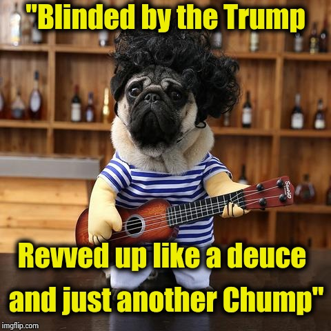 "A new song parody from ""Weird"" Al Dogovic (Bruce won't like it) 