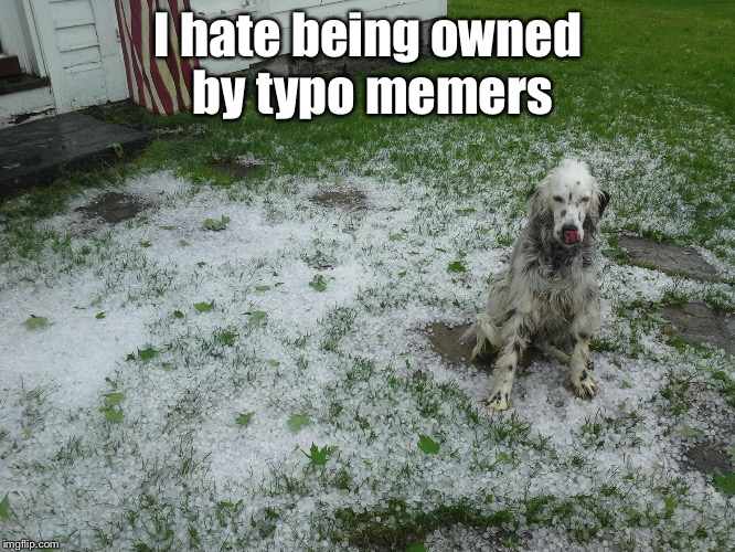 I hate being owned by typo memers | made w/ Imgflip meme maker