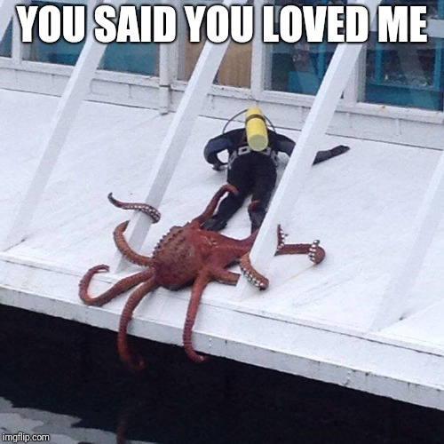 octopus |  YOU SAID YOU LOVED ME | image tagged in octopus | made w/ Imgflip meme maker