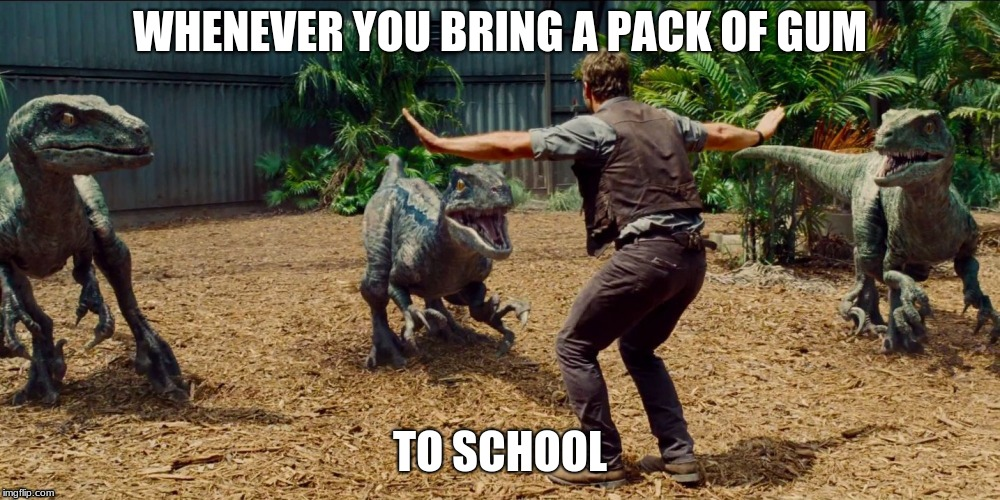 been there, have you? | WHENEVER YOU BRING A PACK OF GUM TO SCHOOL | image tagged in jurassic park raptor | made w/ Imgflip meme maker