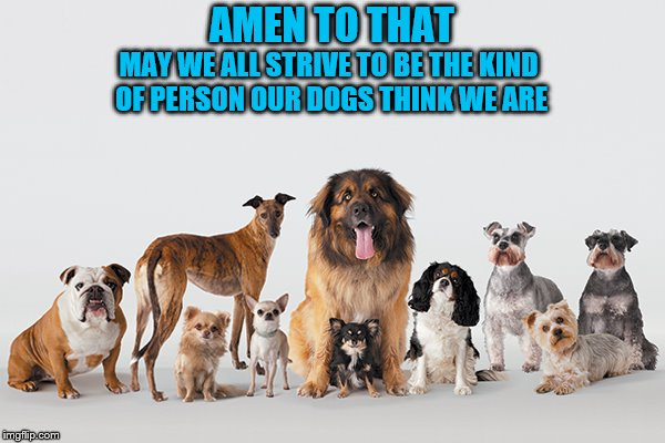 Faithful Friends | AMEN TO THAT MAY WE ALL STRIVE TO BE THE KIND OF PERSON OUR DOGS THINK WE ARE | image tagged in dogs,sympathy,faithful,friends | made w/ Imgflip meme maker