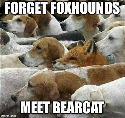 Fox and Foxhounds | FORGET FOXHOUNDS MEET BEARCAT | image tagged in fox and foxhounds | made w/ Imgflip meme maker