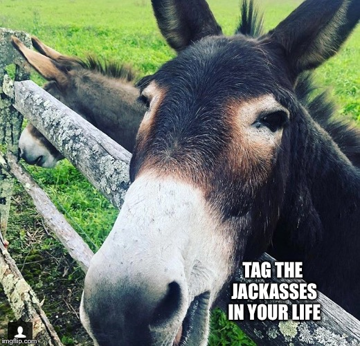 Come on I won't tell them you said it | TAG THE JACKASSES IN YOUR LIFE | image tagged in jackass,stupid,funny,memes | made w/ Imgflip meme maker