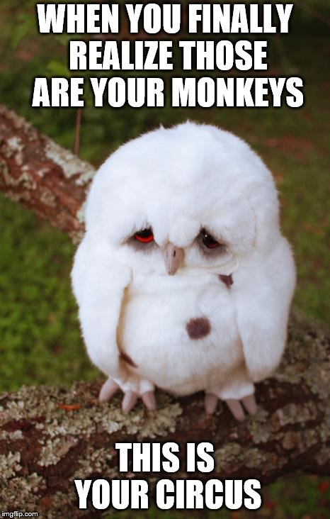 sad owl | WHEN YOU FINALLY REALIZE THOSE ARE YOUR MONKEYS THIS IS YOUR CIRCUS | image tagged in sad owl | made w/ Imgflip meme maker