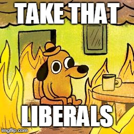 Dog in burning house | TAKE THAT LIBERALS | image tagged in dog in burning house | made w/ Imgflip meme maker