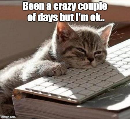 tired cat | Been a crazy couple of days but I'm ok.. | image tagged in tired cat | made w/ Imgflip meme maker
