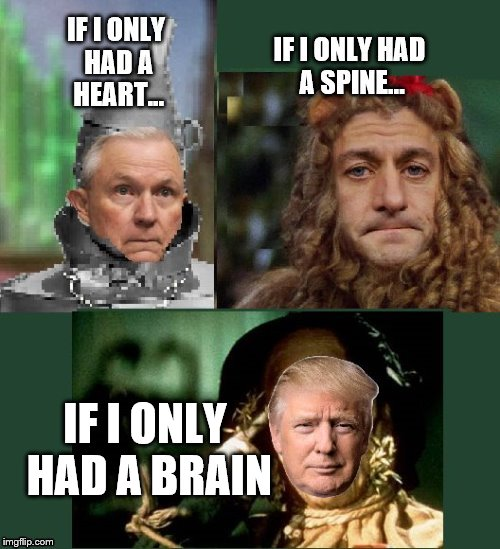 Brainless Trump |  IF I ONLY HAD A BRAIN | image tagged in political meme | made w/ Imgflip meme maker