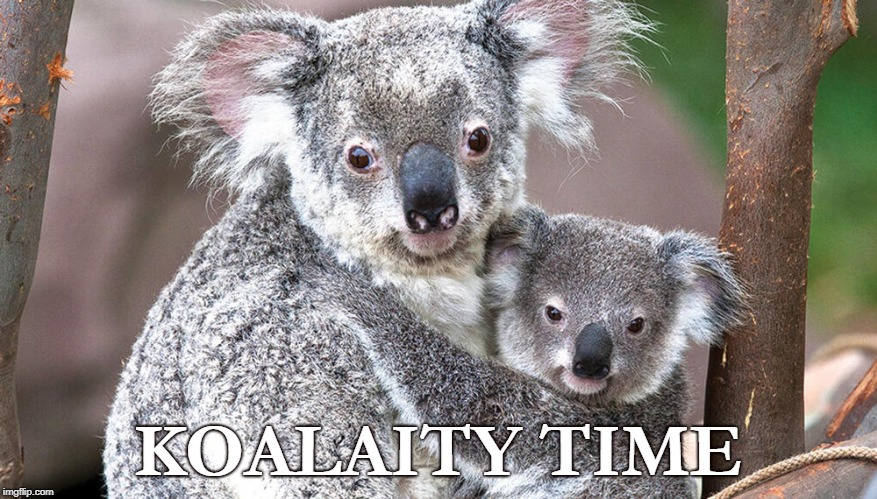 Koalaity Time | KOALAITY TIME | image tagged in koala,quality time,love | made w/ Imgflip meme maker