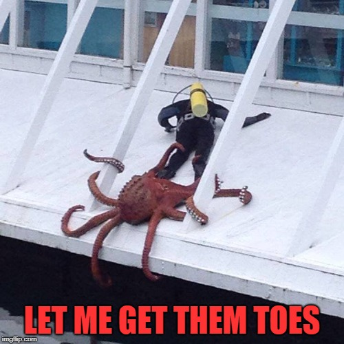 LET ME GET THEM TOES | image tagged in octopus | made w/ Imgflip meme maker