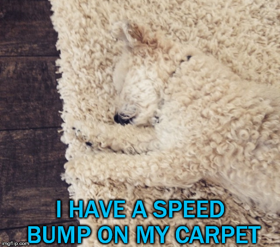 When your dog melts into the carpet you need to slow down to run them over. | I HAVE A SPEED BUMP ON MY CARPET | image tagged in memes,dog,camouflage,hidden,cute dog | made w/ Imgflip meme maker