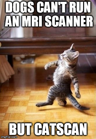 Cool Cat Stroll | DOGS CAN'T RUN AN MRI SCANNER BUT CATSCAN | image tagged in memes,cool cat stroll | made w/ Imgflip meme maker