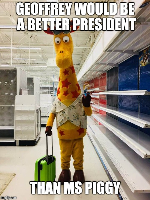 Bitter Geoffrey | GEOFFREY WOULD BE A BETTER PRESIDENT THAN MS PIGGY | image tagged in bitter geoffrey | made w/ Imgflip meme maker