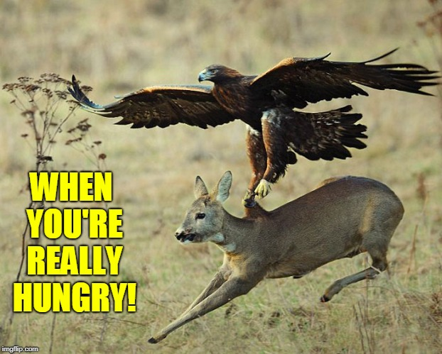 When Your Eyes are Bigger than Your Stomach | WHEN YOU'RE REALLY HUNGRY! | image tagged in vince vance,golden eagle,deer,natural selection,national geographic,predators | made w/ Imgflip meme maker