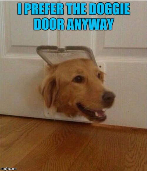 wtf dog | I PREFER THE DOGGIE DOOR ANYWAY | image tagged in wtf dog | made w/ Imgflip meme maker