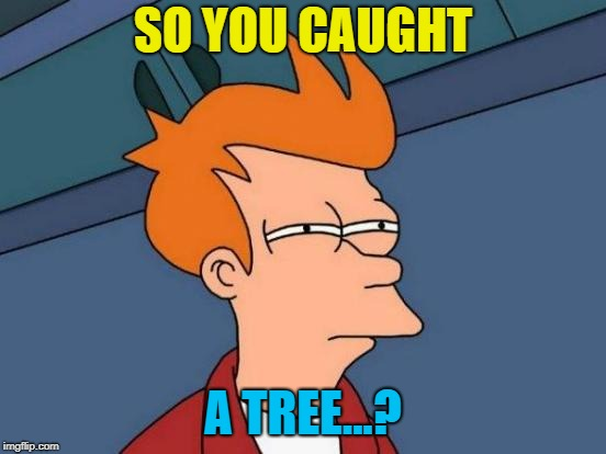 Futurama Fry Meme | SO YOU CAUGHT A TREE...? | image tagged in memes,futurama fry | made w/ Imgflip meme maker