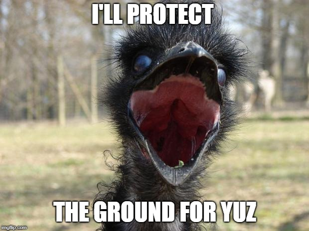Laughing Emu | I'LL PROTECT THE GROUND FOR YUZ | image tagged in laughing emu | made w/ Imgflip meme maker
