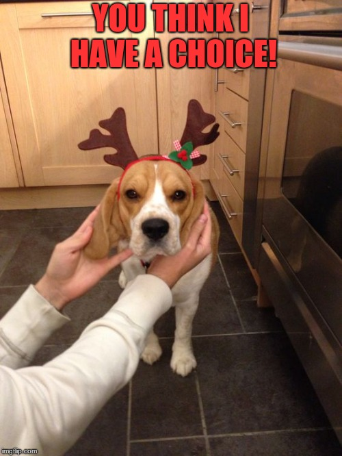 YOU THINK I HAVE A CHOICE! | image tagged in grumpy beagle hates cristmas | made w/ Imgflip meme maker