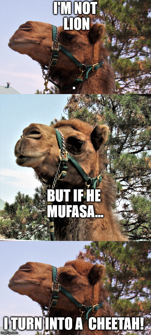 camel joker | I'M NOT LION BUT IF HE MUFASA... I TURN INTO A  CHEETAH! | image tagged in camel joker | made w/ Imgflip meme maker