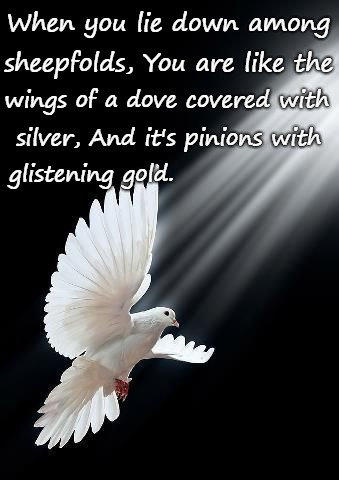 Psalms 68:13 You Are Like The Wings Of A Dove Covered With Silver | When you lie down among glistening gold. sheepfolds, You are like the wings of a dove covered with silver, And it's pinions with | image tagged in bible,holy bible,bible verse,verse,god,dove | made w/ Imgflip meme maker