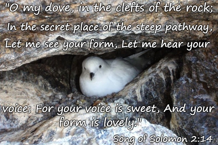 "Song of Solomon 2:14 My Dove In The Clefts O the Rocks Let Me See  Your Form Let Me Hear Your Voice Your Form Is Lovely | ""O my dove, in the clefts of the rock; Song of Solomon 2:14 In the secret place of the steep pathway, Let me see your form, Let me hear your 