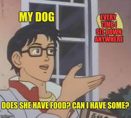 Is This A Pigeon Meme | MY DOG EVERY TIME I SIT DOWN ANYWHERE DOES SHE HAVE FOOD? CAN I HAVE SOME? | image tagged in memes,is this a pigeon | made w/ Imgflip meme maker