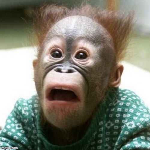 Shocked Monkey | image tagged in shocked monkey | made w/ Imgflip meme maker