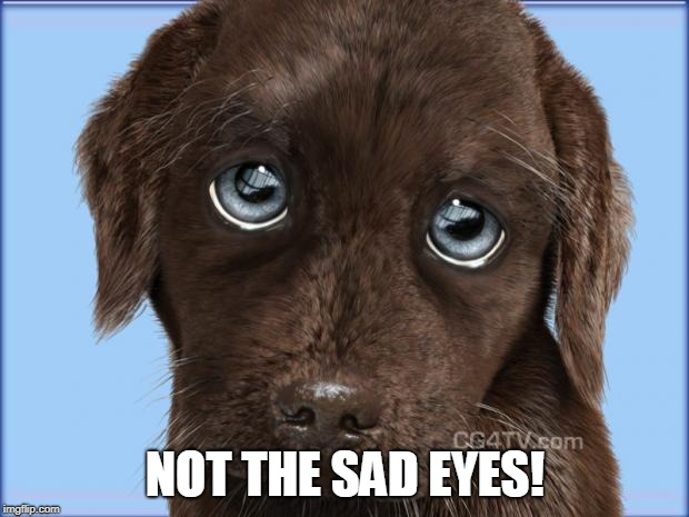Puppy dog eyes | NOT THE SAD EYES! | image tagged in puppy dog eyes | made w/ Imgflip meme maker