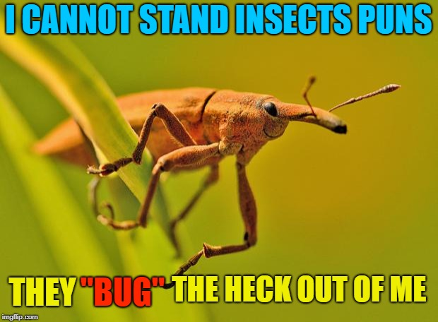 "Quit with the ""Bugging""  