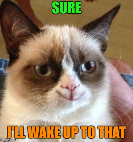 grumpy smile | SURE I'LL WAKE UP TO THAT | image tagged in grumpy smile | made w/ Imgflip meme maker