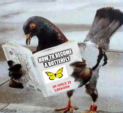 Pigeon reading book | HOW TO BECOME A BUTTERFLY | image tagged in pigeon reading book | made w/ Imgflip meme maker