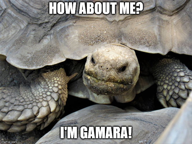 grumpy tortoise | HOW ABOUT ME? I'M GAMARA! | image tagged in grumpy tortoise | made w/ Imgflip meme maker