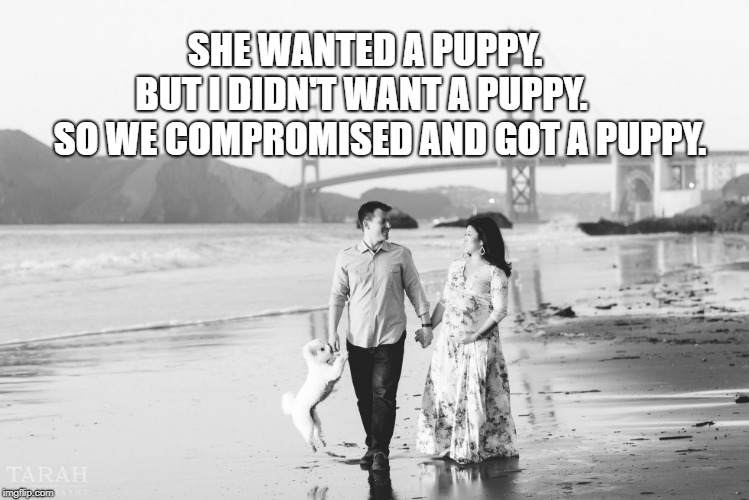 This Guy Knows What's Good For Him... | SHE WANTED A PUPPY.        BUT I DIDN'T WANT A PUPPY.         SO WE COMPROMISED AND GOT A PUPPY. | image tagged in relationships,marriage,marriage equality,thoroughly modern marriage,women,men | made w/ Imgflip meme maker
