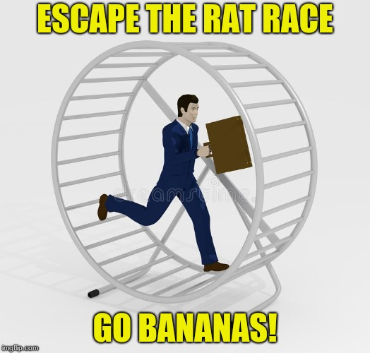rat race |  ESCAPE THE RAT RACE; GO BANANAS! | image tagged in go bananas,rat race | made w/ Imgflip meme maker