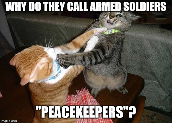 "Two cats fighting for real | WHY DO THEY CALL ARMED SOLDIERS ""PEACEKEEPERS""? 