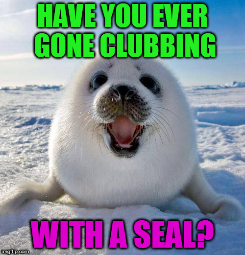 It is bad if they still do this. | HAVE YOU EVER GONE CLUBBING WITH A SEAL? | image tagged in cute seal,clubbing,funny meme,dark humor,cute | made w/ Imgflip meme maker