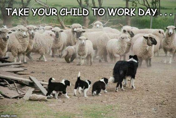 Child to Work Day | TAKE YOUR CHILD TO WORK DAY . . . | image tagged in cute animals | made w/ Imgflip meme maker