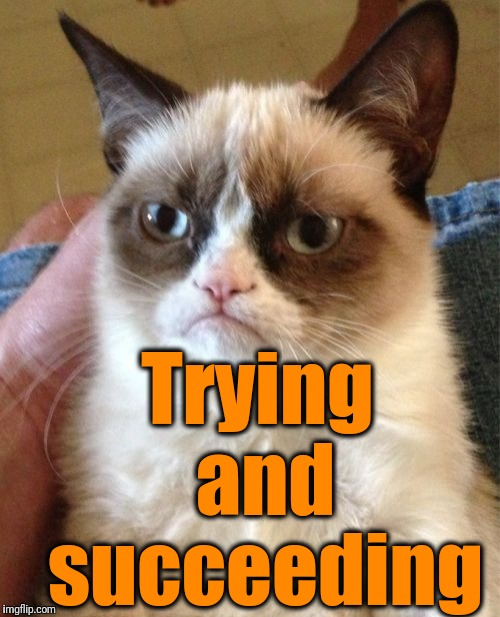 Grumpy Cat Meme | Trying and succeeding | image tagged in memes,grumpy cat | made w/ Imgflip meme maker