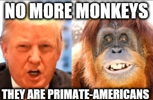 Donald trump is an orangutan | NO MORE MONKEYS THEY ARE PRIMATE-AMERICANS | image tagged in donald trump is an orangutan | made w/ Imgflip meme maker