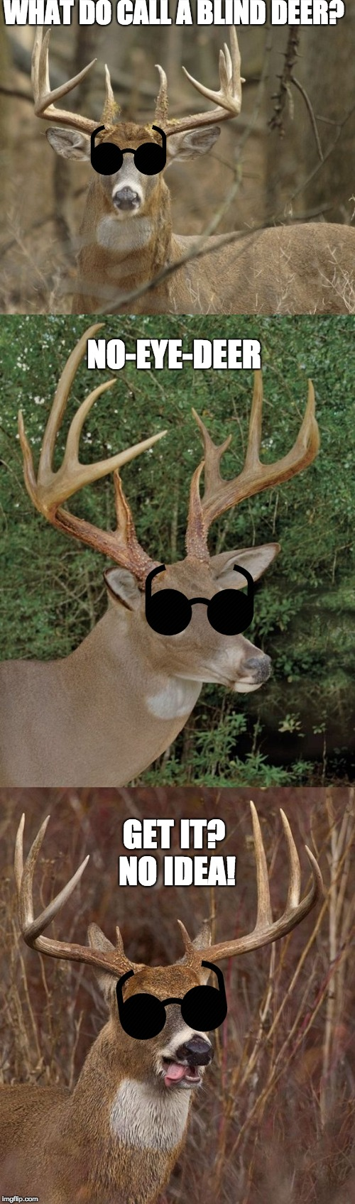 Bad Pun Buck | WHAT DO CALL A BLIND DEER? NO-EYE-DEER GET IT? NO IDEA! | image tagged in bad pun buck | made w/ Imgflip meme maker