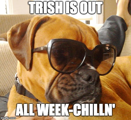 Boxer On Vacation | TRISH IS OUT ALL WEEK-CHILLN' | image tagged in boxer dog | made w/ Imgflip meme maker