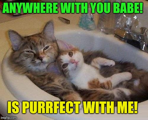 Anywhere with you babe!  | ANYWHERE WITH YOU BABE! IS PURRFECT WITH ME! | image tagged in cats in sink,crazy love | made w/ Imgflip meme maker