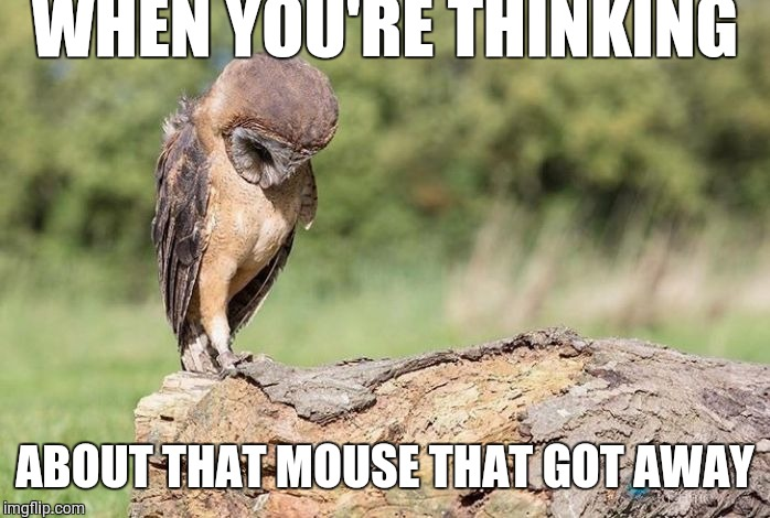 Sad owl | WHEN YOU'RE THINKING ABOUT THAT MOUSE THAT GOT AWAY | image tagged in sad owl | made w/ Imgflip meme maker